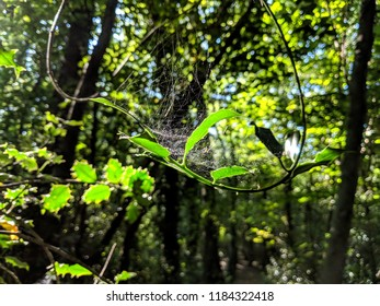 Cob web in a forest