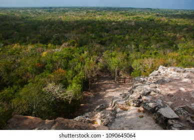 Coba, Mexico, Yucatan: top view of the jungle from the great pyramid of Coba Nohoch Mul