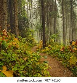 The Cobb Lake Trail in Kootenay National Park near Radium Hot Springs, British Columbia, Canada.