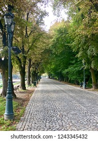Cobble stone walking path lined with trees in a park in Rzeszow, Poland.