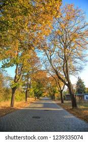 Cobblestone road in western Poland