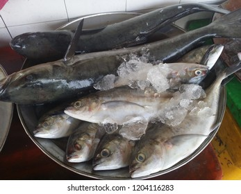 cobia and scad fish