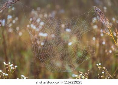 Cobweb in drops on foggy day
