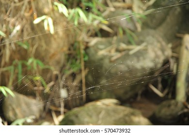 Cobweb in the florest. Small spiderweb in the forest northen.