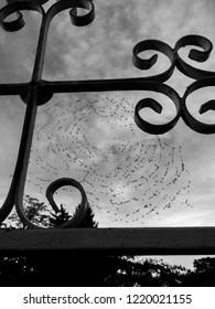 The cobweb and midges on it.