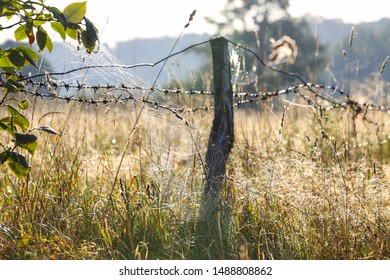 Cobweb on the old pasture fence, beautiful pasture meadow landscape in background at sunrise.