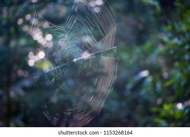 Cobweb at Sinharaja rain forest reserve back lit with the morning sun light