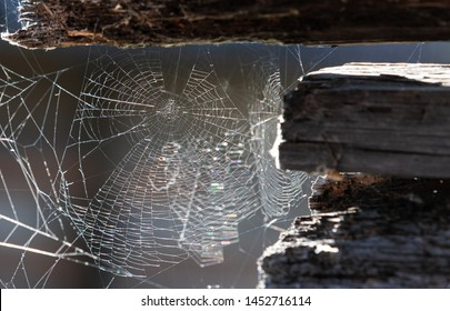 Cobweb or spiderweb on old wooden texture background wall in ancient house. Old grunge spiderweb weathered dusty wall & cobweb. Spiderweb spooky, scary, horror background.