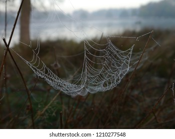 Cobweb at sunrise