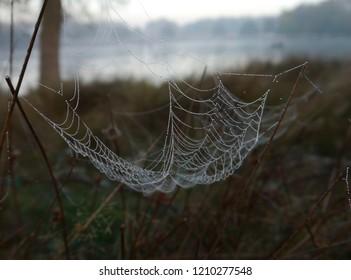 Cobweb at sunrise