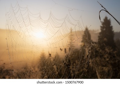 Cobweb at sunrise. Bright transparent and glittering blurred natural background. rural scenery. Early summer morning in the meadow. A web in drops of dew in the rays of the sun as beads or decoration.