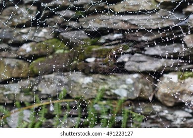 Cobweb with water droplets after rain
