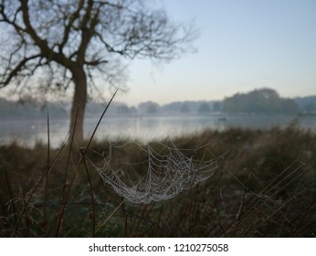 Cobwebs at misty sunrise
