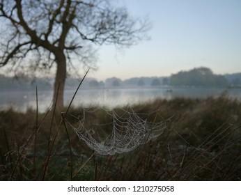 Cobwebs at misty sunrise