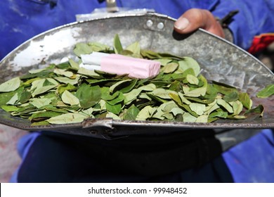 Coca Leaves Images, Stock Photos & Vectors | Shutterstock