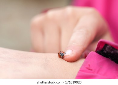 The Coccinellidae are a family of small beetles