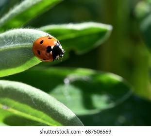 Coccinellidae soaking up the sun