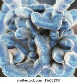 Coccus Bacteria - Clostridium perfringens