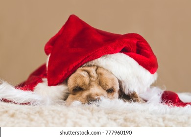 Cocer spaniel posing near christmas tree and decorations. Christmas dog and cute santa hat.