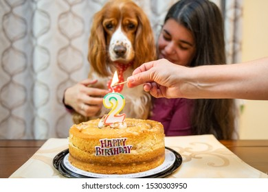 Cocker Spaniel dog pet gets his second birthday celebrated by its human family. Adorable images of domestic animal friends