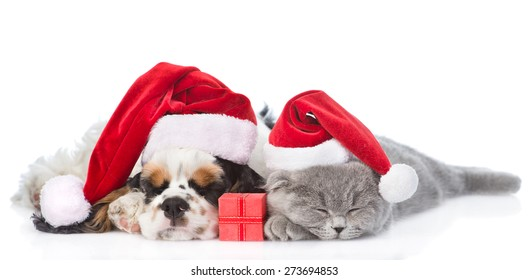 Cocker Spaniel puppy and tiny kitten with gift box sleeping in red santa hat. isolated on white background