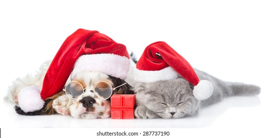 Cocker Spaniel puppy and tiny kitten with gift box sleeping in red santa hats. isolated on white background
