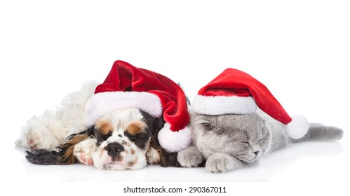 Cocker Spaniel puppy and tiny kitten sleeping in red santa hats. isolated on white background