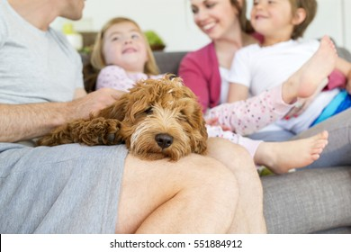 Cockerpoo Dog is sleeping on it's owners lap. The owner is sitting on a sofa in his home with the rest of his family.