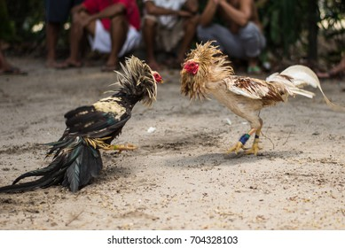 Cockfight in Port Barton, Philipphines.  In the Philippines, cockfighting, people betting and sometimes fighting to the death are legal