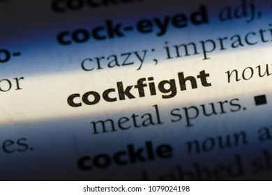 cockfight word in a dictionary. cockfight concept