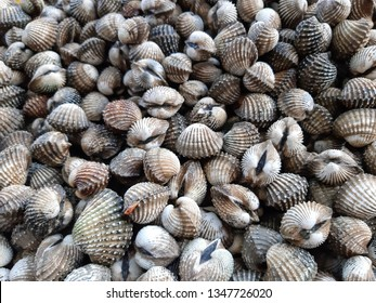 Cockle pile or Scallop cockles (Scientific name: Tegillarca granosa) .Water animals ,shellfish.Food ingredients