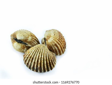 cockles isolated on white background / fresh raw blood cockle seafood