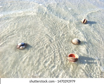 Cockles on the beach, Cockles with sand, Animal on beach, Sea Shell, Cockles Shell