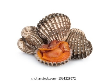cockles seafood isolated on white background