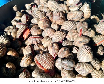 The cockles seafood, pile of fresh blood cockles top view, cockles or scallop fresh raw shellfish, cockle shells for sale in the market
