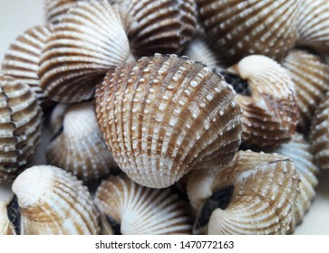 Cockles seafood, pile of fresh cockles, cockles or scallop fresh raw shellfish, cockle shells for sale in the fresh market.