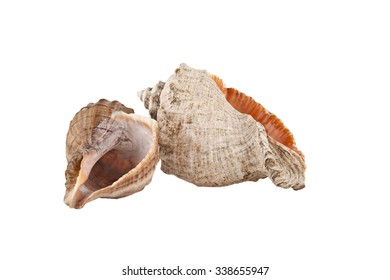 cockleshells isolated on white background