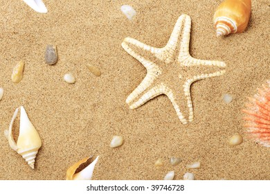 Cockleshells and a starfish lie on sand seacoast