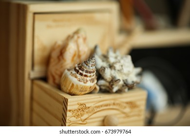 cockleshells in a wooden box