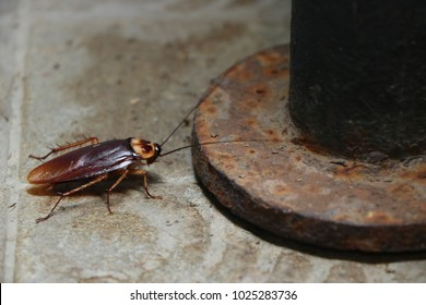 Cockroach is an animals which carrying bacteria into the house.