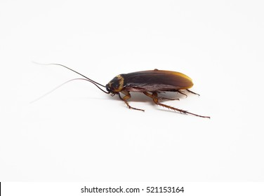 Cockroach brown background and white, cockroaches tip over, legs cockroach, mustache cockroach