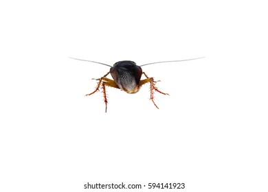Cockroach brown background and white, cockroaches tip over, legs