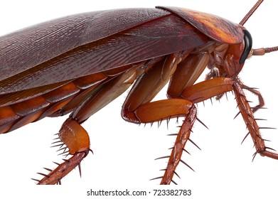 Cockroach bug american creature urban animal, close view. 3D rendering