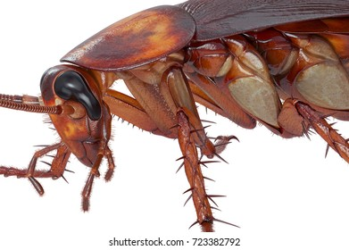 Cockroach bug small creature disease animal, close view. 3D rendering