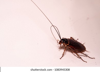 A cockroach is cleaning its antenna after swimming in the toilet bowl.