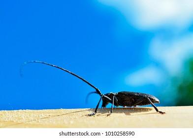 cockroach creeps against the blue sky