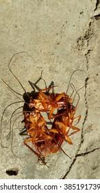 cockroach is dead on cement floor