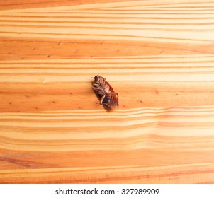 cockroach is dead on wood background