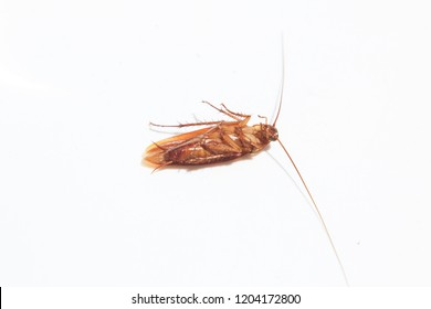 cockroach death cockroach on white background