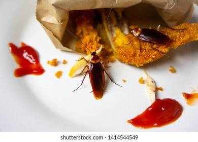 Cockroach eat food (fried chicken) in the dish and in the kitchen. It's makes them dirty and poor hygiene in the house. Cockroaches are carriers of the disease.